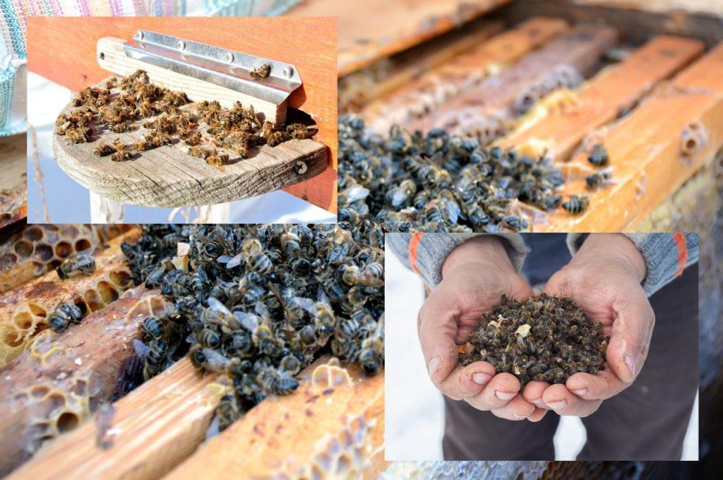 Лікувальні властивості та способи застосування бджолиного подмору